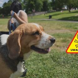 Uwaga! Trutki dla psów na os. Oświecenia