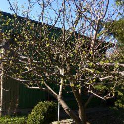 Warsztaty: samowystarczalny ogród na niedużej powierzchni