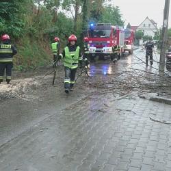 Przewrócone drzewo na ul. Mistrzejowickiej